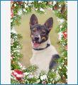 Ищу дом Харту!!! 1,5 года, 19 кг, в холке 50 см. Активный, позитивный, человекоориентированный! Здоров, привит, кастрирован, чипирован! Звоните! 8-916-911-9440 http://vk.com/club_hart  http://vk.com/hart_dog